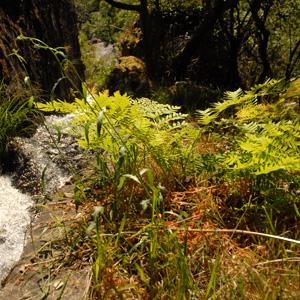 galicia-2013-agua-canales
